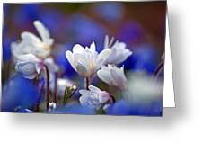 Pretty In White Greeting Card