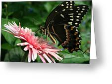 Pretty On Pink Greeting Card