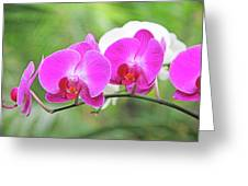 Pretty Orchids All In A Row Greeting Card