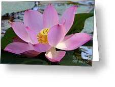 Pretty Pink Lotus Greeting Card