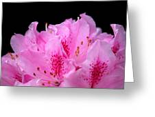 Pretty Pink Rhododendron Blossoms Greeting Card