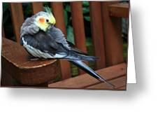 Pretty Polly Greeting Card