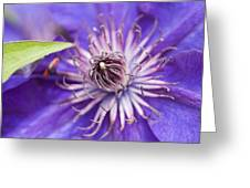 Pretty Purple Clematis Greeting Card