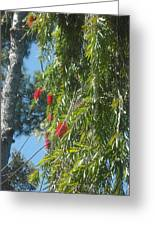Pretty Red Furry Flowers Greeting Card