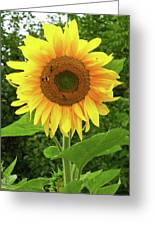Pretty Sunflower  Greeting Card