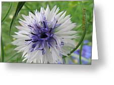 Pretty White And Purple Greeting Card