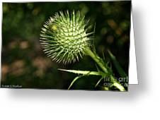 Prickly Globe Greeting Card