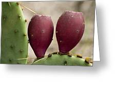 Prickly Pear Cactus Fruit Greeting Card
