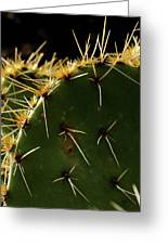 Prickly Pear Dangerous Beauty - Greeting Card Greeting Card