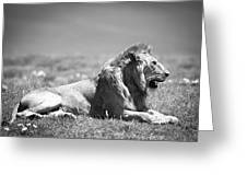 Pride In Black And White Greeting Card