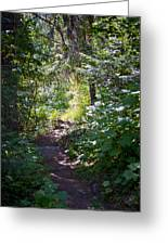 Priest Lake Trail Series IIi - Trail Shadows Greeting Card
