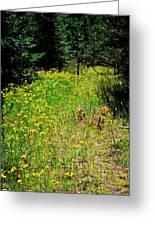 Priest Lake Trail Series Iv - Small Meadow Greeting Card