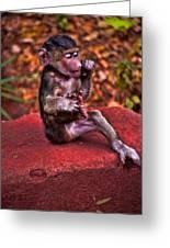 Primate Footsie Games Greeting Card