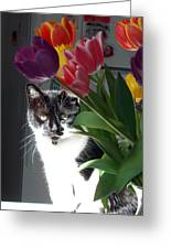 Princess The Cat And Tulips Greeting Card