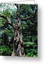 Princess Tree Greeting Card