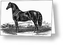 Prize Horse, 1857 Greeting Card