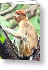 Proboscis Monkey Greeting Card