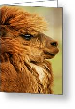 Profile Of A Camelid Greeting Card