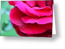 Profile Of A Rose Greeting Card