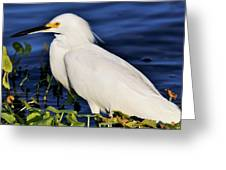 Profile Of A Snowy Egret Greeting Card