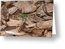 Profile Of Green Dragonfly Greeting Card