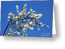 Promise Of Summer Greeting Card
