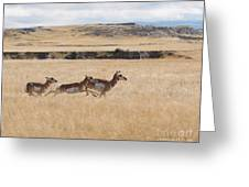 Pronghorn Antelopes On The Run Greeting Card
