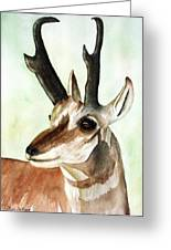 Pronghorn Magesty Greeting Card