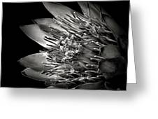 Protea In Black And White Greeting Card