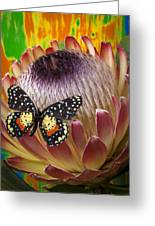 Protea With Speckled Butterfly Greeting Card