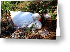 Protecting Her Eggs Greeting Card