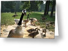 Protective Mad Mama Canadian Goose Greeting Card