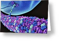 Protein, Microtubules And Cell, Artwork Greeting Card