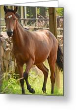 Proud Horse Greeting Card