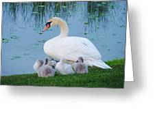 Proud Mother Swan Greeting Card