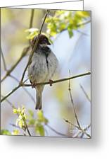 Proud Sparrow Greeting Card