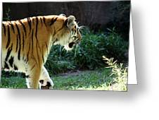 Prowling 2 Greeting Card