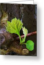 Pruning And New Growth Greeting Card
