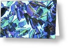 Psyllium, Light Micrograph Greeting Card by Pasieka
