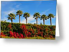 Pt. Dume Palms Greeting Card