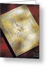 Pterodactylus Elegans Greeting Card