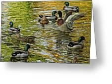 Ducks Unlimited 02 Greeting Card