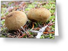 Puffballs Greeting Card