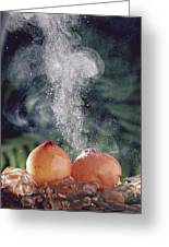 Puffballs Releasing Spores Greeting Card