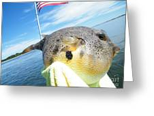 Puffer Love Greeting Card by Laurence Oliver