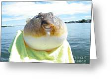 Puffer Smile Greeting Card by Laurence Oliver