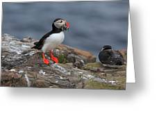 Puffin With Sand Eels Greeting Card