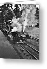 Puffing Billy Black And White Greeting Card