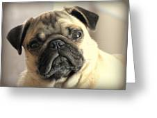 Pug Love Greeting Card