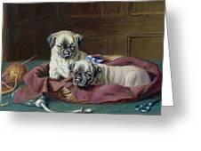 Pug Puppies In A Basket Greeting Card